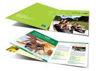 CATALOG MẪU BROCHURE